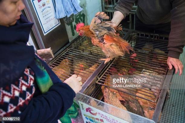 A shop owner shows a customer a live chicken for sale in the Wanchai markets of Hong Kong on December 30 2016 Hong Kong on Friday confirmed its...