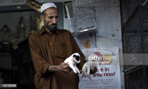 A shopkeer holds puppies for sale at a pet shop in