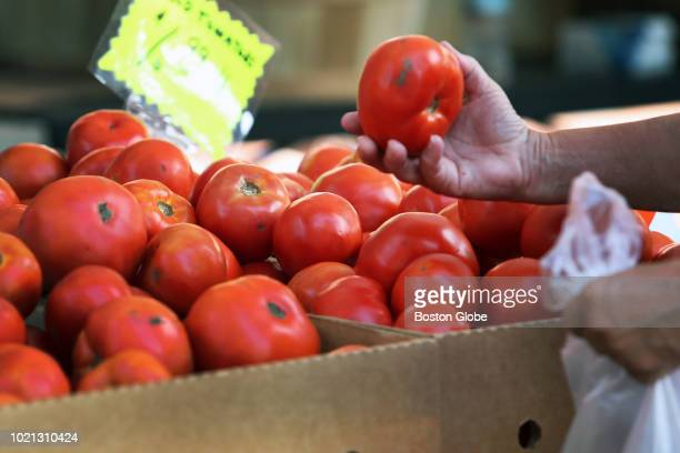 A shopper browses for tomatoes at the Salem Farmer's Market in Salem MA on Aug 9 2018 Its high season in New England and the produce at farm stands...