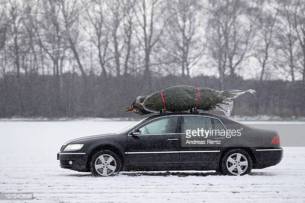 156 Christmas Tree On Car Roof Photos And Premium High Res Pictures Getty Images