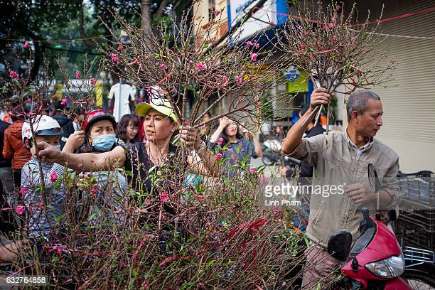 Shoppers browse cherry blossom for sale at Hang Luoc street Lunar New Year fair a favorite shopping place for local people in the Old Quarter on...