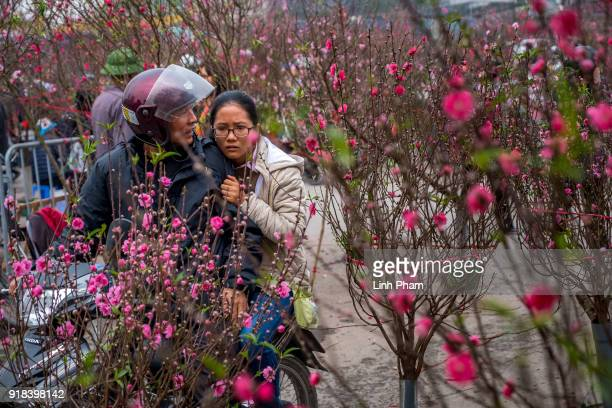 Shoppers browse for cherry blossoms on February 14 2018 in Hanoi Vietnam The Chinese Lunar New Year also known as the Spring Festival which is based...