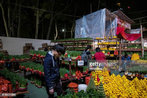 Shoppers look at narcissus flowers and solanum mammosum also known as nipplefruit displayed for sale at the Lunar New Year fair at Victoria Park in...