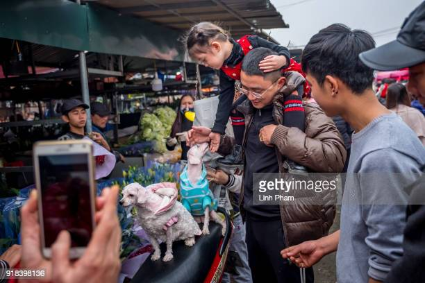 Shoppers pose for photos with two look alike dogs at Quang Ba flower market a favorite shopping place for local people for the Lunar New Year on...
