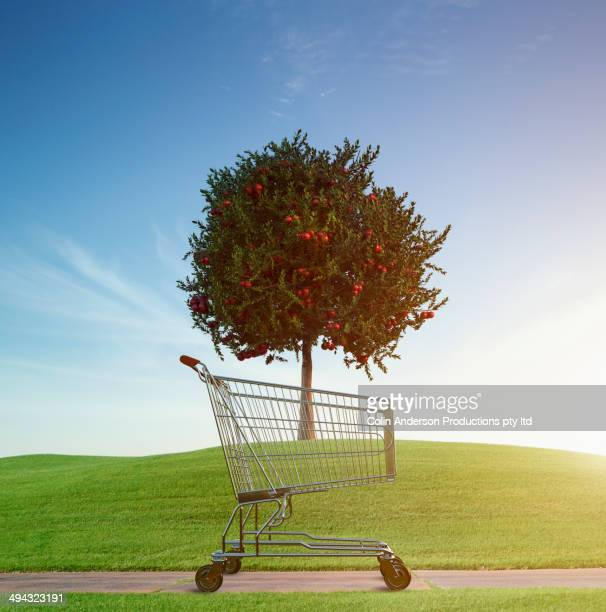 Shopping cart by apple tree in rural field