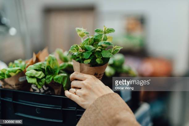 shopping for fresh herbs at supermarket - supermarket stock pictures, royalty-free photos & images