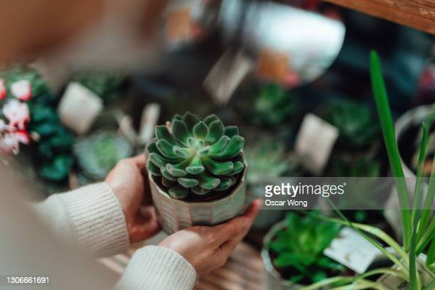 shopping for potted plants in store - supermarket stock pictures, royalty-free photos & images