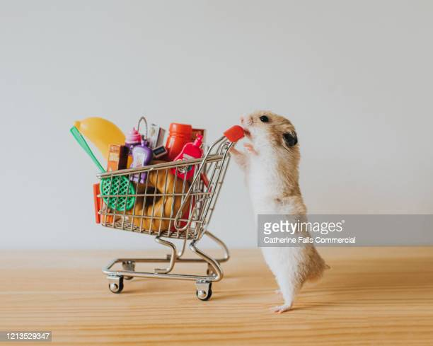 shopping hamster - small stock pictures, royalty-free photos & images