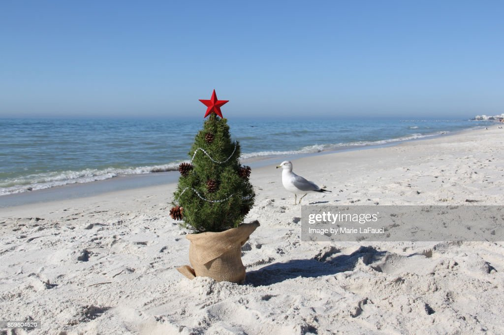 A shore bird standing next to a Christmas tree on the beach : Stock Photo