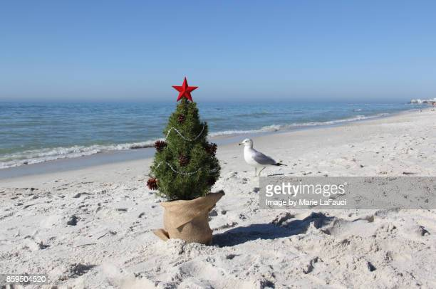 a shore bird standing next to a christmas tree on the beach - florida christmas stock pictures, royalty-free photos & images