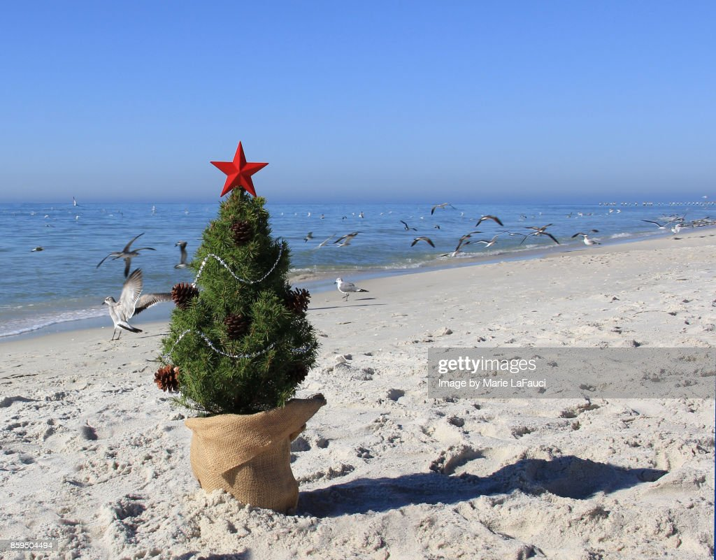 shore birds flying by a christmas tree on the beach stock photo