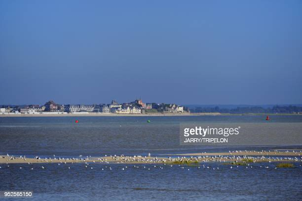 Shorebirds with on background the town of Le Crotoy Baie de Somme and Cote d'Opale area Somme department Picardie region France