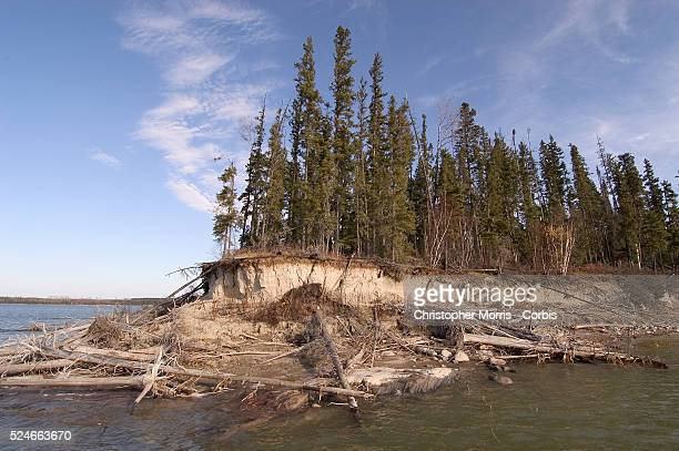 Shoreline erosion on Sipiwesk Lake caused by constantly fluctuating water levels due to the Manitoba Hydro Jenpeg generating station near the Cross...