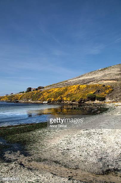 Shoreline of New Island, Falkland islands