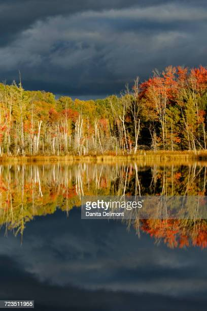 shoreline of red jack lake at sunrise, hiawatha national forest, upper peninsula of michigan, usa - hiawatha national forest stock pictures, royalty-free photos & images