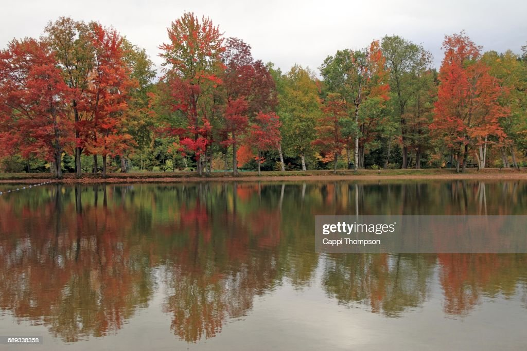 Shoreline reflections during fall : Stock Photo