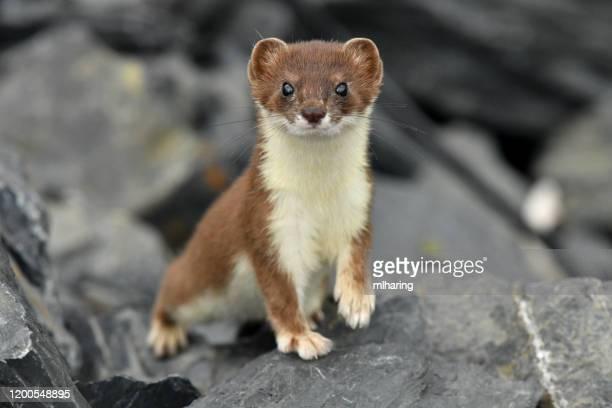 オオヤシ - 野生動物 ストックフォトと画像