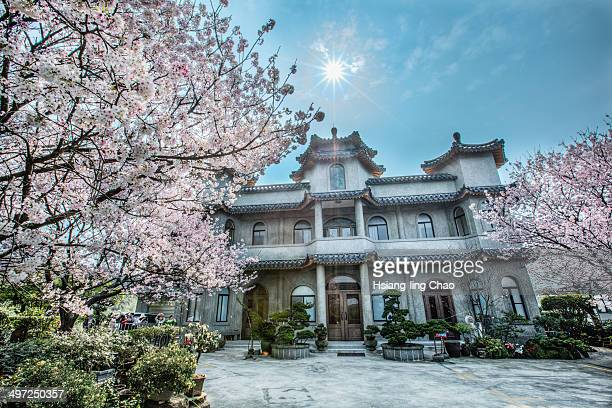 Shot of a Chinese temple with cherry blossoms and sun burst.