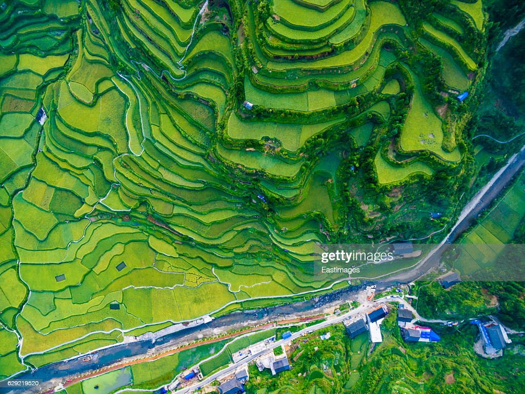 WS AERIAL shot of green rice terraces in morning,Guizhou,China. : Stock-Foto