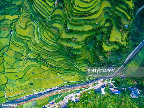 ws aerial shot of green rice terraces in morning,guizhou,china. - rice terrace stockfoto's en -beelden