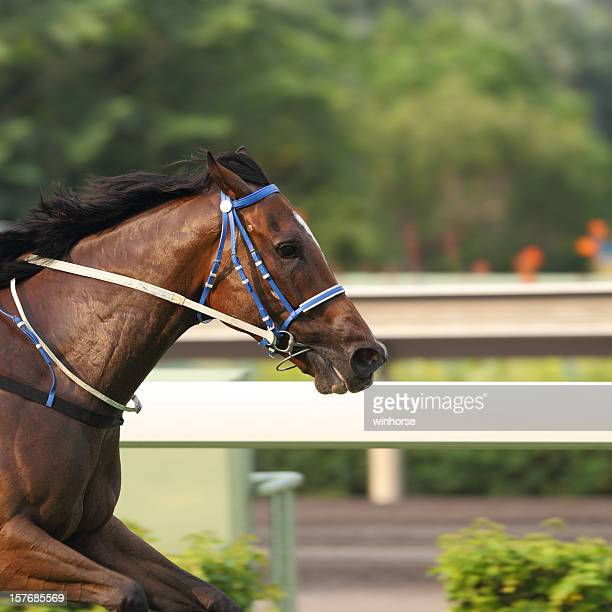a shot of the front half of a horse racing outdoors  - horse racing stock pictures, royalty-free photos & images