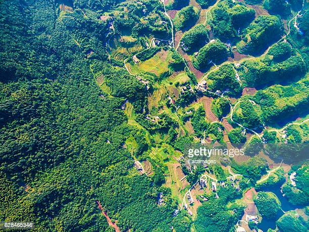 AERIAL shot of Village house nearby bamboo forest at sunset,Sichuan,China.