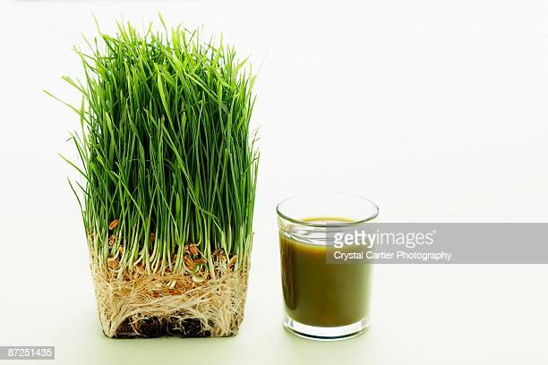 Shot of wheat grass