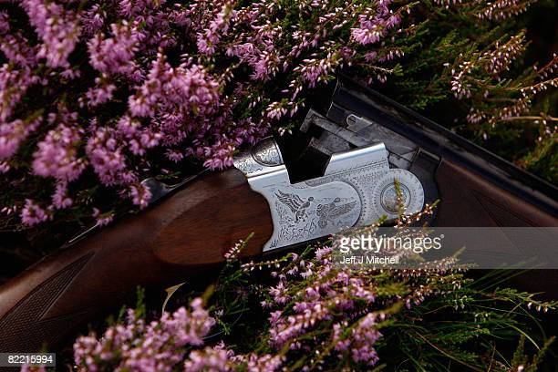 A shotgun is placed in the heather on the Railia and Milton Estate on Drumochter moor on August 8 2008 near Dalwhinnie in Scotland As the glorious...