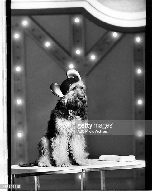 July 24 1978 DOG