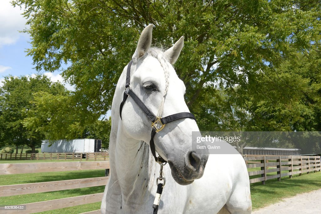 Show horse for the Cavalia Odysseo on August 16, 2017 in Franklin, Tennessee.