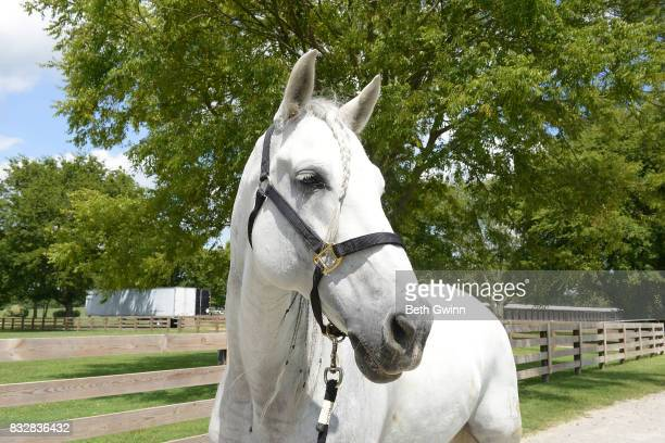 Show horse for the Cavalia Odysseo on August 16 2017 in Franklin Tennessee