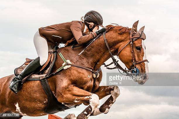 show jumping - horse with rider jumping over hurdle - horse racing stock pictures, royalty-free photos & images