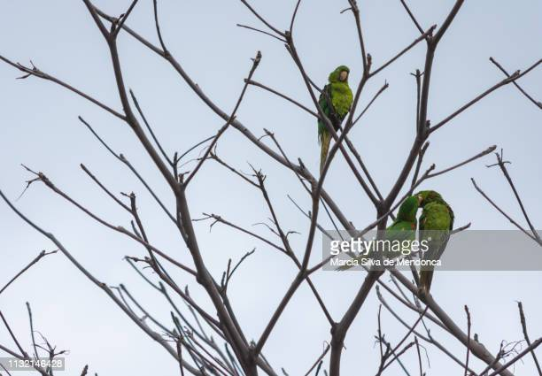 A show of affection among birds, much like parrots, among the dry branches of a tree.