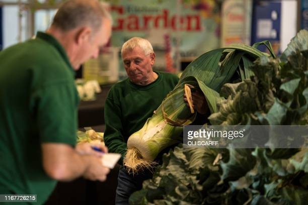 Show staff manoeuvre huge leeks to be weighed in the giant vegetable competition on the first day of the Harrogate Autumn Flower Show held at the...