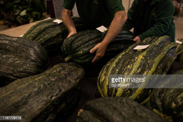 Show staff manoeuvre huge marrows to be weighed in the giant vegetable competition on the first day of the Harrogate Autumn Flower Show held at the...