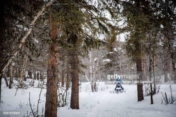 showbike in the woods - verwaltungsbezirk buskerud stock-fotos und bilder