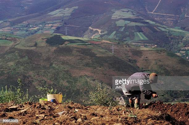 Showed field View of a woman sowing a field Ancares Sierra Leon province