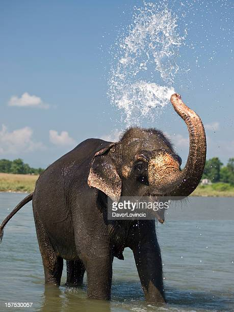 shower - elephant face stock photos and pictures