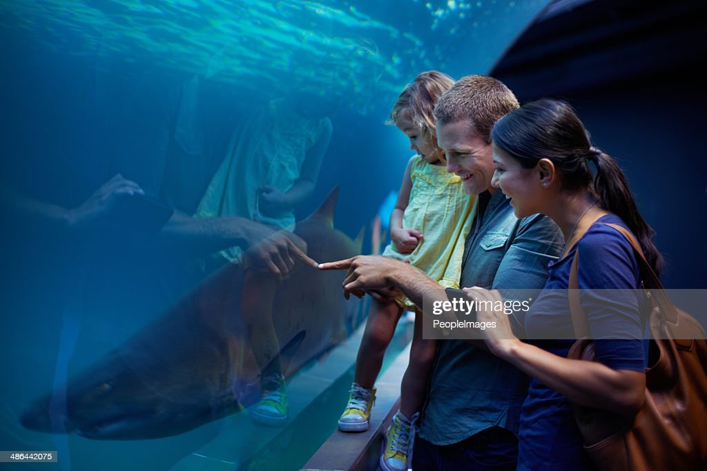 Showing her the sharks : Stock Photo