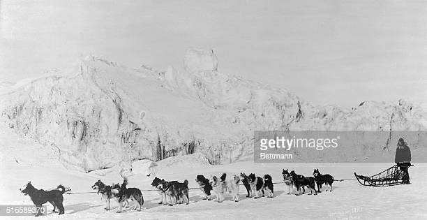 Shown is the type of dog team being used to rush 300000 units of antitoxin to this city from several points in Alaska to aid in the fight against the...