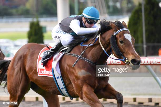 Showpero ridden by Jamie Kah wins the Epi Café Plate at Moonee Valley Racecourse on June 16 2018 in Moonee Ponds Australia