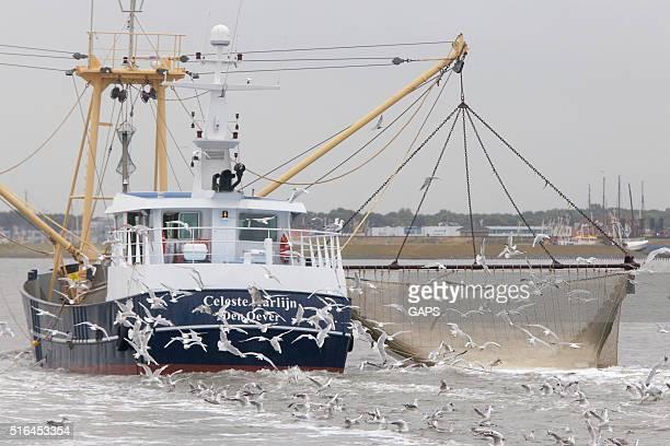 shrimp boat fishing for shrimps on the Wadden Sea