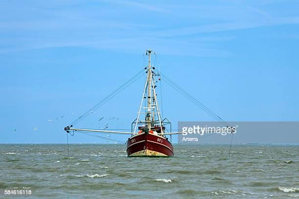 Shrimp boat fishing in the Wadden sea North Frisia Germany