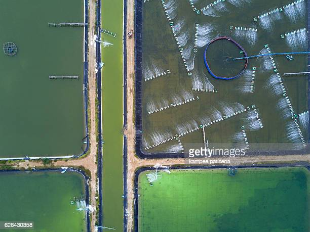 Shrimp farms from above in Sam Roi Yot National Park, Thailand
