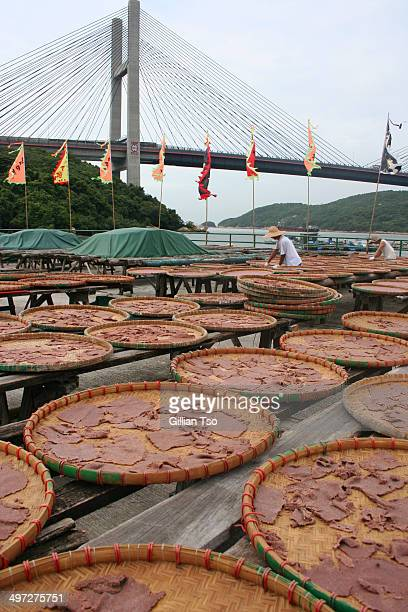 CONTENT] Shrimp paste a popular condiment used in Chinese and Southeast Asian cooking is made by drying fermenting and grinding shrimps Here it is...