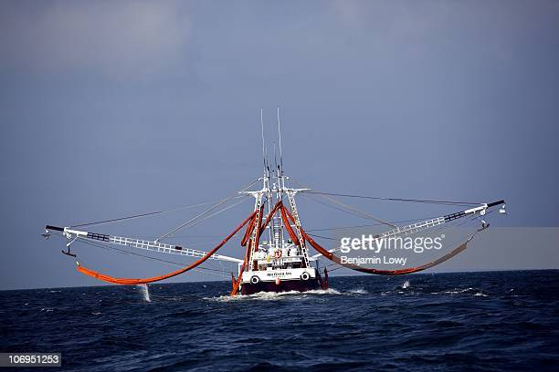 A shrimping boat on contract to BP for oil cleanup operations lays oil absorbent boom on May 8 2010 in the Gulf of Mexico