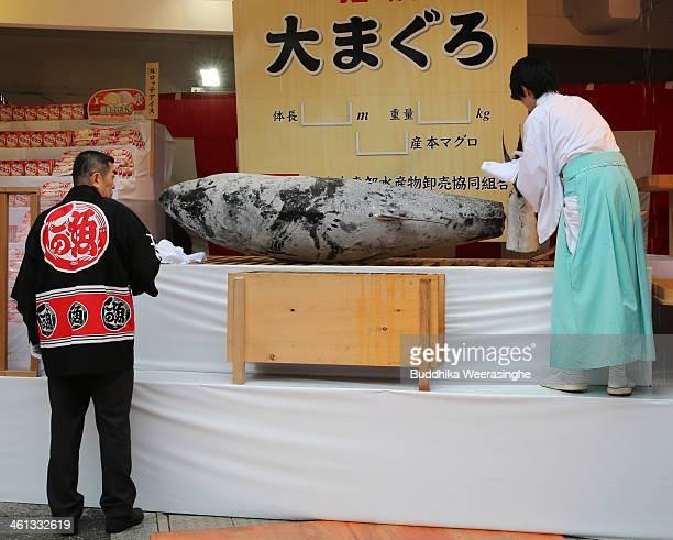 Shrine priest arranges a 2.6 meters long, 260 kilograms weight bluefin tuna for offe to god at Nishinomiya Shrine, the head shrine of Ebisu sect, a...