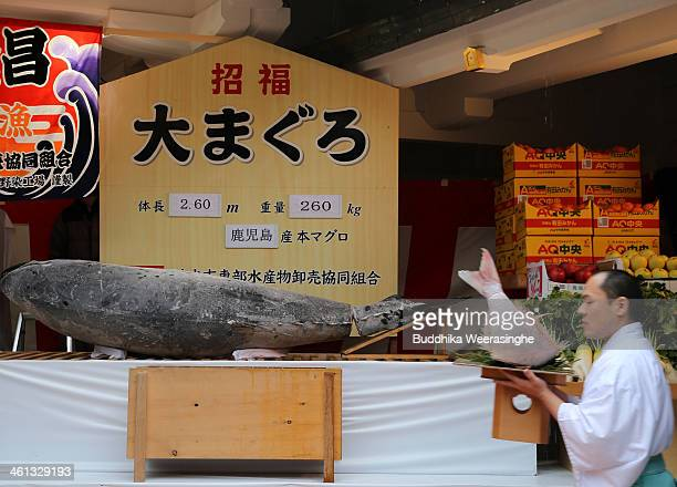 Shrine priest performs a ritual for offered 2.6 meters long, 260 kilograms weight bluefin tuna at Nishinomiya Shrine, the head shrine of Ebisu sect,...