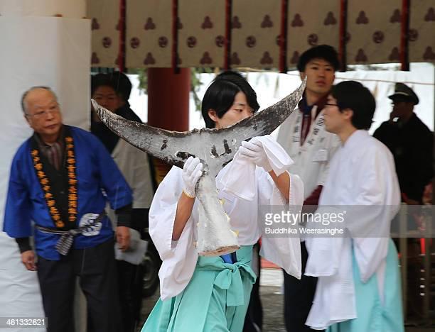 Shrine priest transports the tail of an offered 2.6 meters long, 260 kilograms weight bluefin tuna at Nishinomiya Shrine, the head shrine of Ebisu...