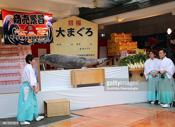 Shrine priests stand beside to offer a 2.6 meters long, 260 kilograms weight bluefin tuna at Nishinomiya Shrine, the head shrine of Ebisu sect, a...